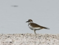 80-killdeer